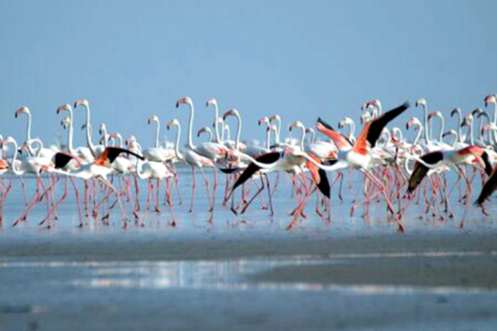 Honeymoon Destinations In India - Kutch