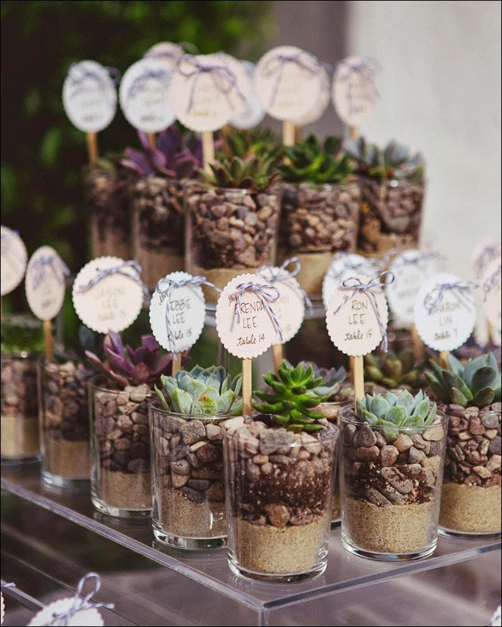 Wedding Favors - Succulent Shots